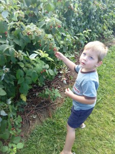 """I was surprised how much fun Elijah had picking raspberries. """"THAT ONE IS PERFECT!!"""""""